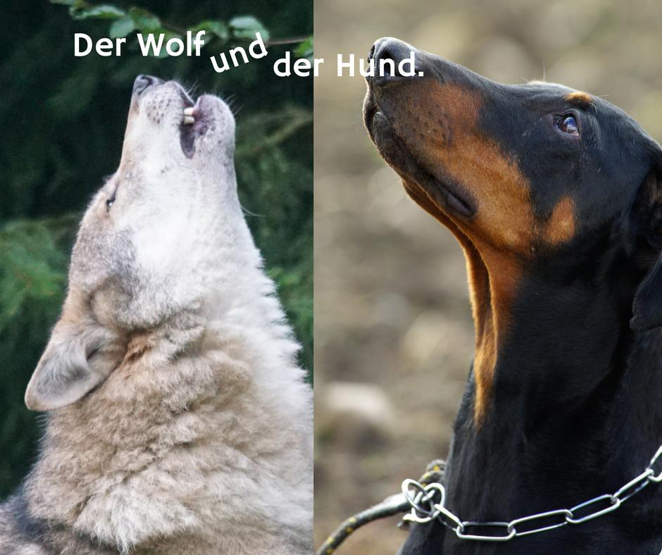 Der Wolf und der Hund. Eine Fabel.