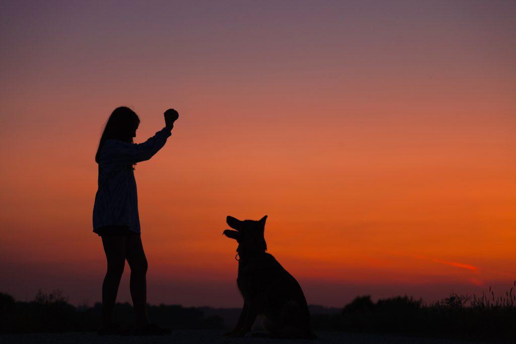 Traumberuf Hundetrainer – ein Blick hinter die Kulissen