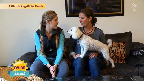 Die wichtigsten Fehler und Erkenntnisse einer ehemaligen Hundetrainerin